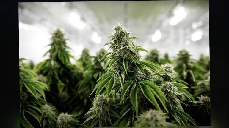 NJ Legalizes Marijuana