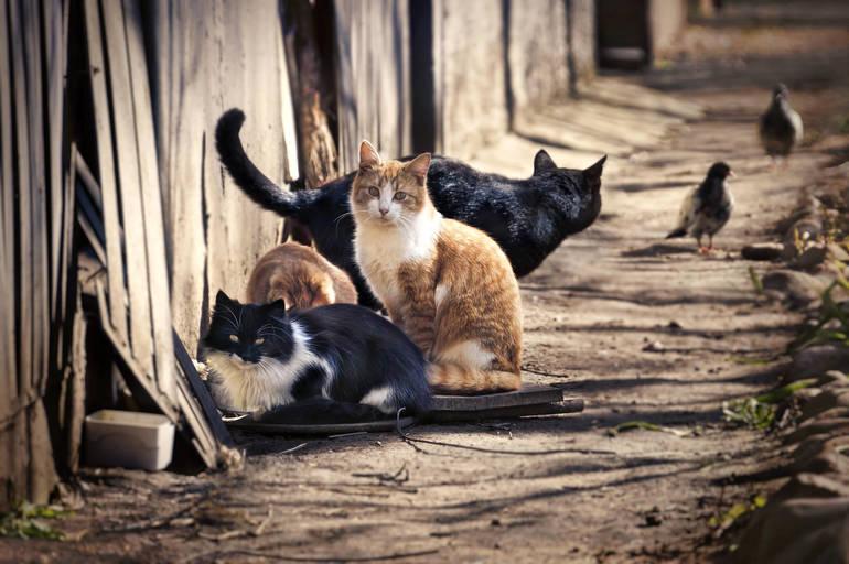 Cat Fence.jpeg