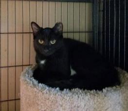 START Pet of the Week: Meet  Caroline