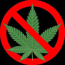 Carousel image ae55999444b220bdc149 31ac09faf211ccc3b83a cannabis 1254745 1280