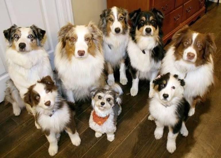 It's National Pet Dental Health Month