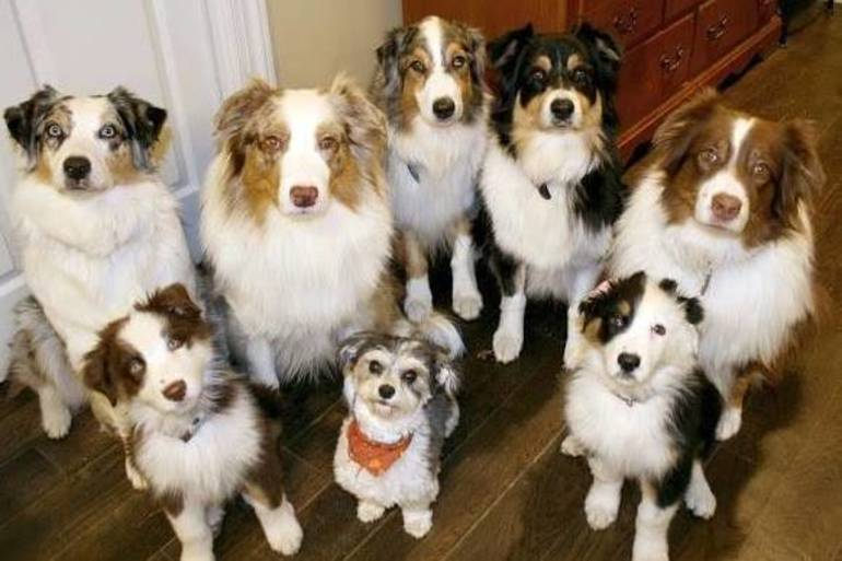 Pet Groomers Added to State's List of Essential Businesses