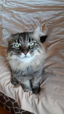 START Pet of the Week: Meet Daysha