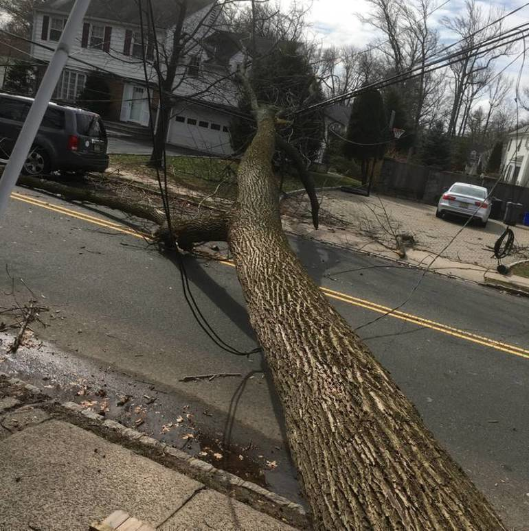 Here is What to do if You Encounter Downed Wires