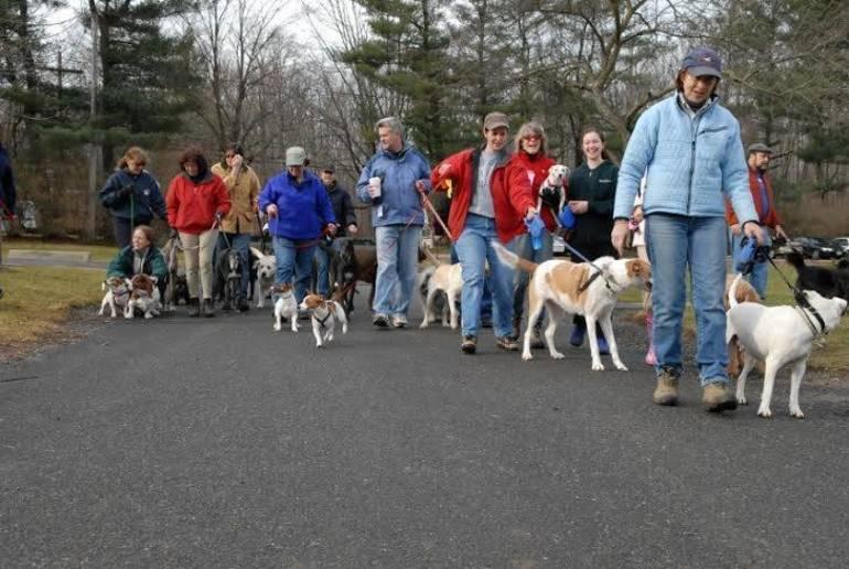 New Year's Day dog walk