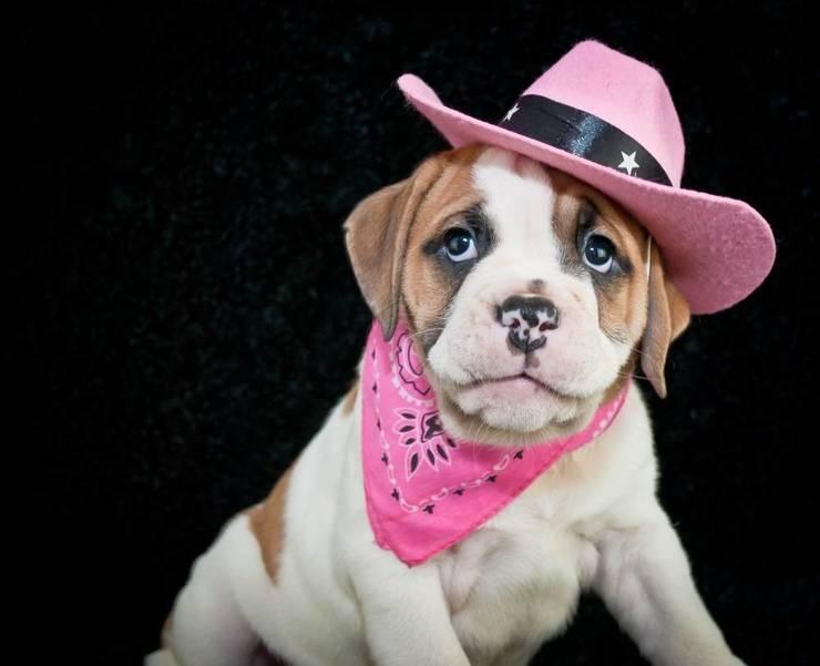 Regal Bank to Host 10th Annual Dog PawradeBenefittingLivingston Animal Shelter