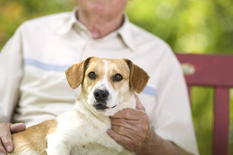 Pets Unaffected By coronavirus; Some Animal Hospitals, Shelters Not So Lucky
