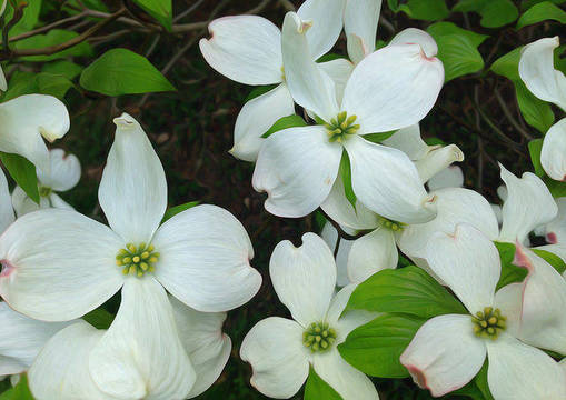 Top story c2316ff90e20ab5013db mini magick20190315 23785 1w1sjrg