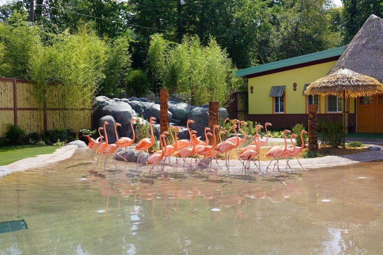 Turtle Back Flamingo Exhibit Dedicated to West Orange Family