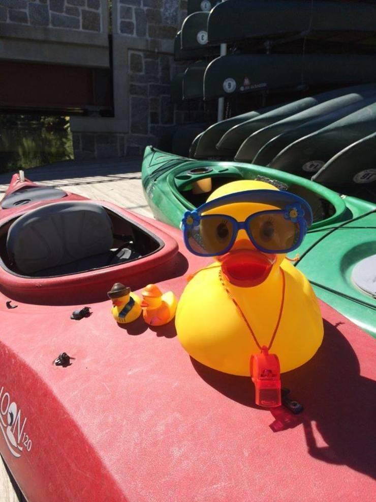 Duck Race Stock Photo.jpg