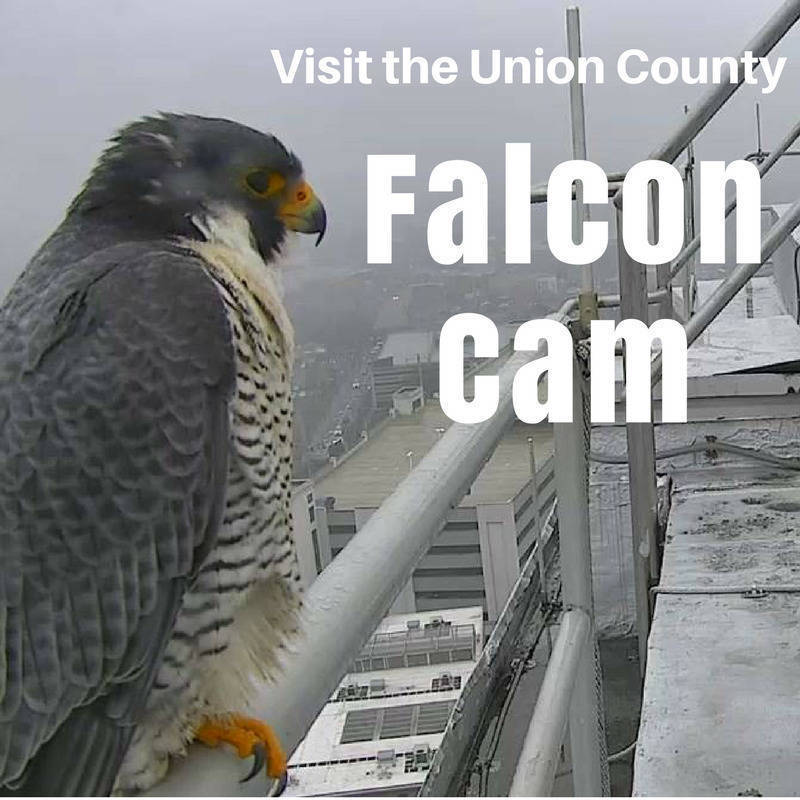FALCON CAM SLIDE.png