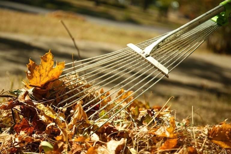 Scotch Plains Announces Final Leaf Pick-Up Schedule