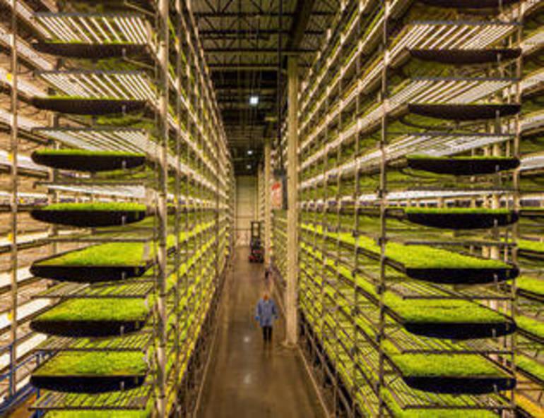 Best crop 2cc6a617b6425fcbf801 c04e726bac4f67cc1fc4 farming