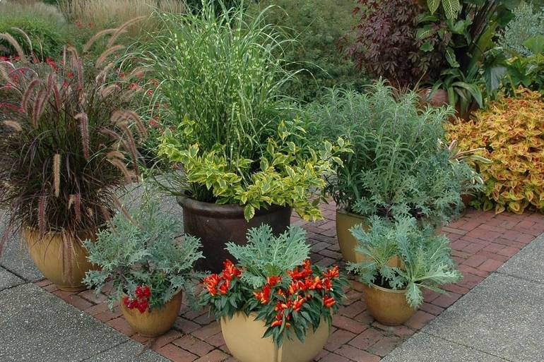 Mix ornamental and edible plantings in fall container gardens for some added color and nutrition.