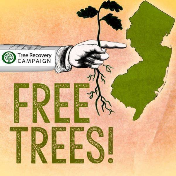 Free Tree Seedlings Available to  Morristown Residents