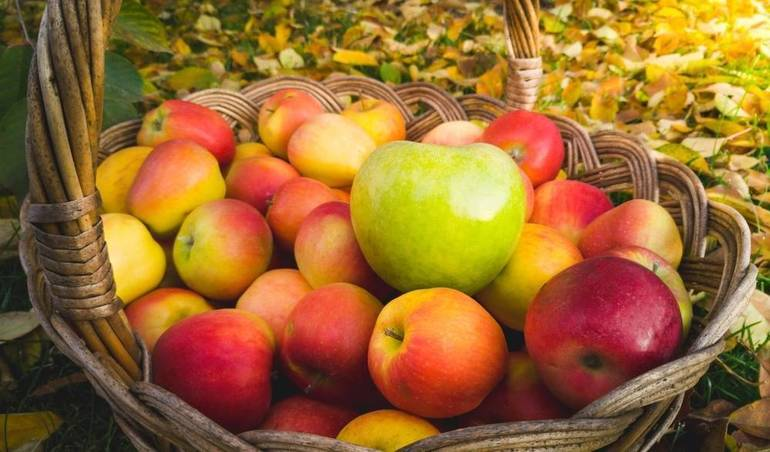 Some of the Best Places To Go Apple Picking In New Jersey