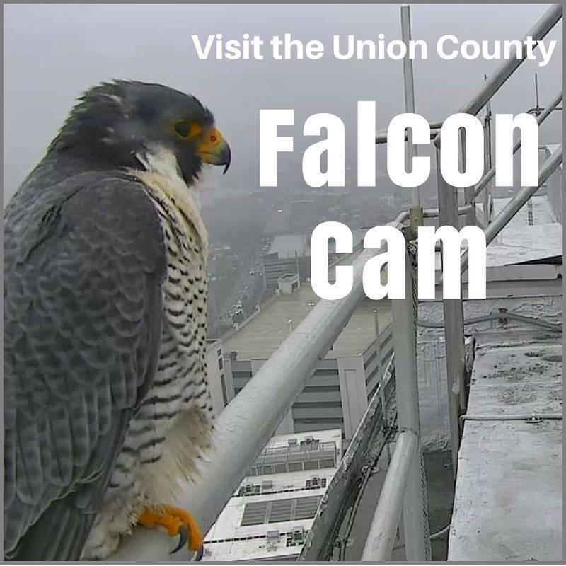 Falcon Cam.png