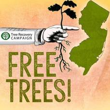 Free Tree Seedlings Available to  Local Residents