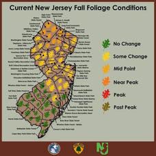 NJ Fall Foliage Forecast, TAPinto, Fall Leaves, Autumn Leaves