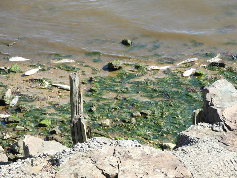 Red Bank: Why All the Dead Fish Along our Shorelines?