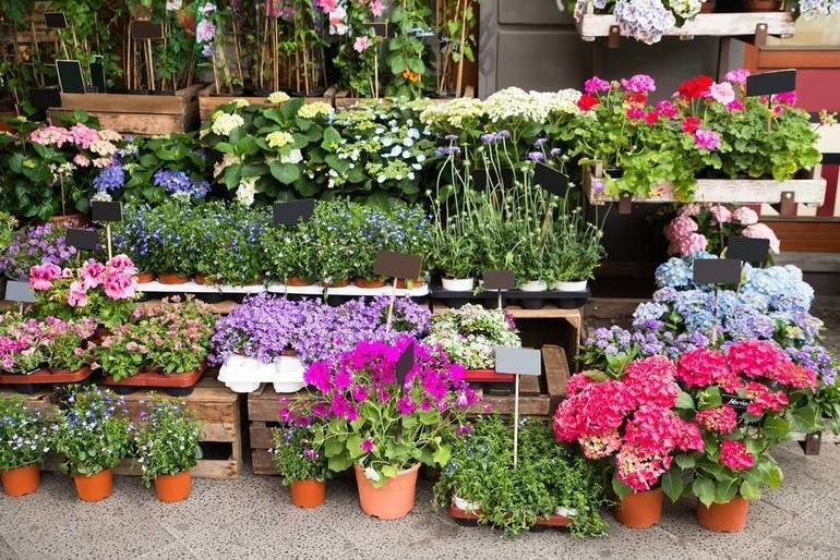 Get A Taste Of Spring With Spotswood PTA's Annual Flower Sale