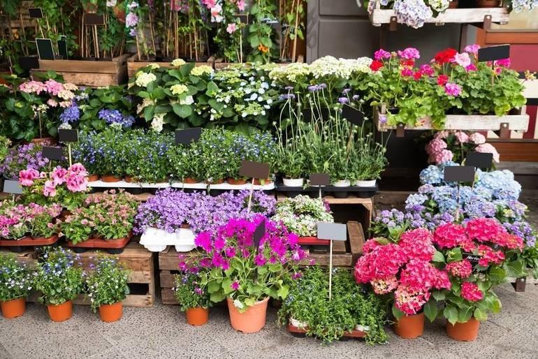 Van Vleck House & Gardens' Online Only – Presale Plant Sale