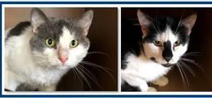 Carousel image 7bbc29364fd433fedcb0 42631c95899f11c29929 foster cats