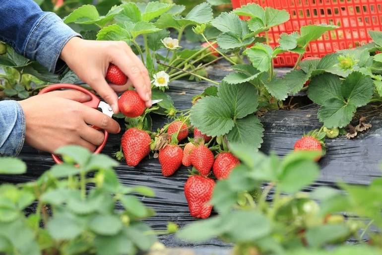 Applications Still Being Accepted for Community Garden
