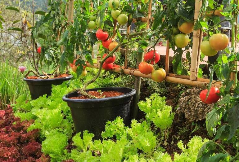 Join the East Brunswick Community Garden for the 2020 Season; Plots Available for New Gardeners
