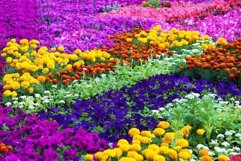 Calling All Gardeners: Pre-Registration For Beginning Gardeners Begins Feb. 3