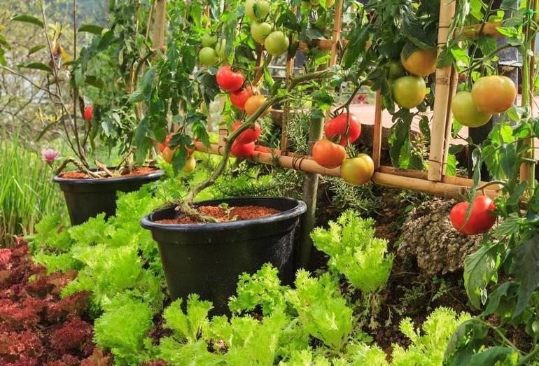 JFSCNJ Seeks Community Garden Volunteers