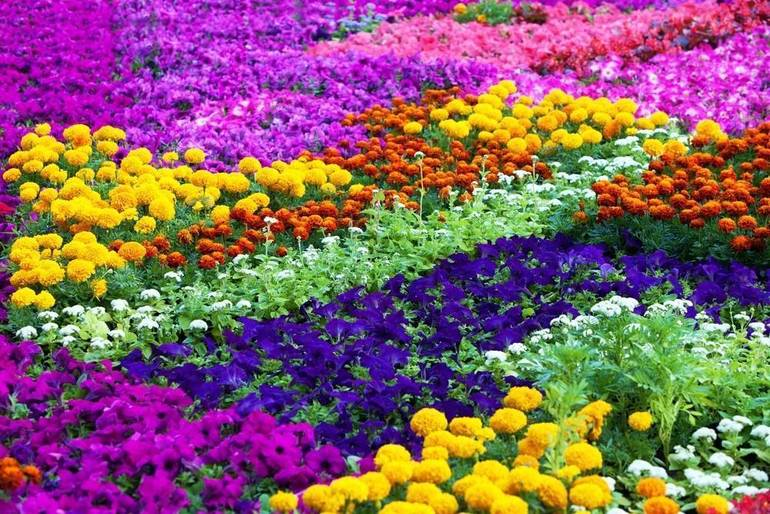 Cheer Up a Neighbor at Halls Garden Center and Florist