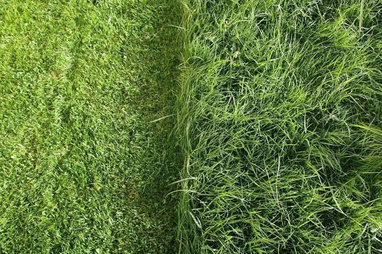 Best crop 6a08f7ee7de57bce0eb1 a084bf2bed95062f6fc4 grass shutterstock 431233024