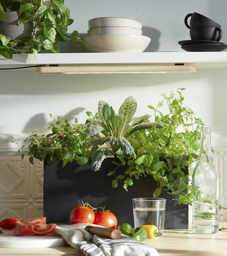 Grow herbs or other leafy greens indoors under a Growbar LED light fixture or near a sunny window.