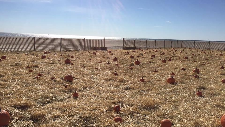 harvest hayride.jpg