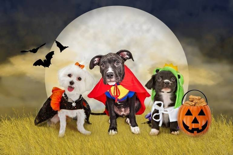 Strut Your Pup or Cat at Annual Robbinsville Halloween Pet Parade, Costume Contest