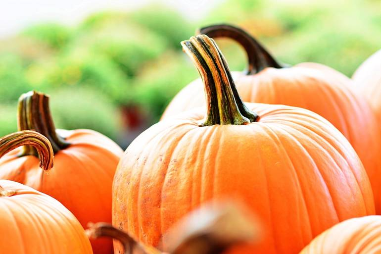 Enter Your Creation in Nutley Public Library's Pumpkin Decorating Contest for Adults 4 p.m. Today!