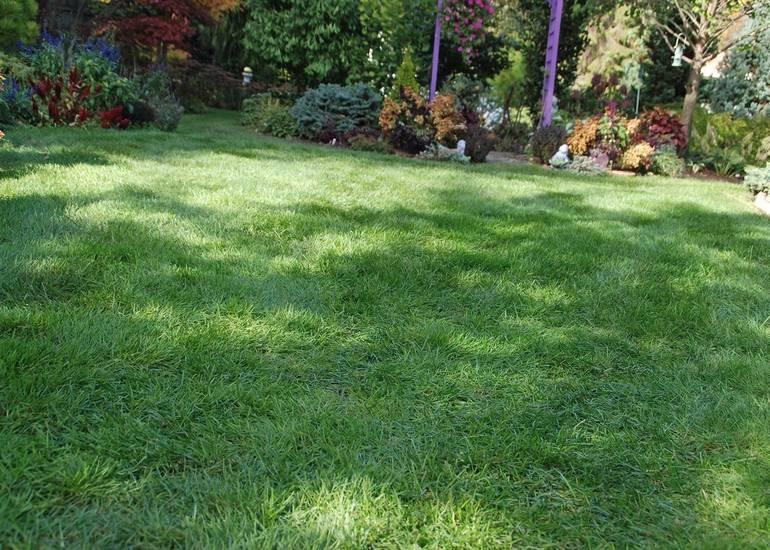 Healthy_lawn