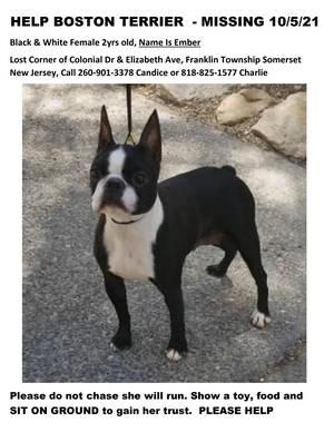 Carousel image 6b1d8a7058cc68d27621 dd7b0419b3362b7effed help lost boston terrier flyer