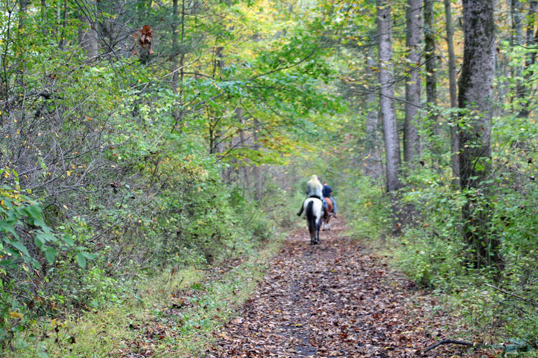 horse on trail.jpg