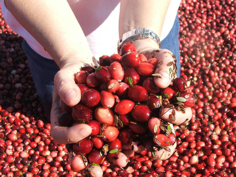 Cranberry Farming Has a History in NJ (Thanksgiving Recipe Included)