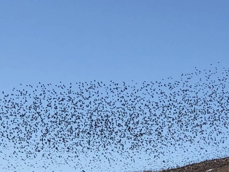 Birding East Brunswick:  On Watch for Winter Species