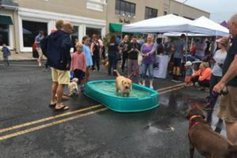 Downtown Westfield Hosts 'Dog Days of Summer'