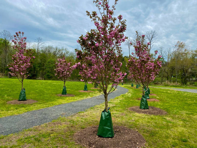 COVID-19 Tree Memorial will honor Scotch Plains residents who died from the disease.