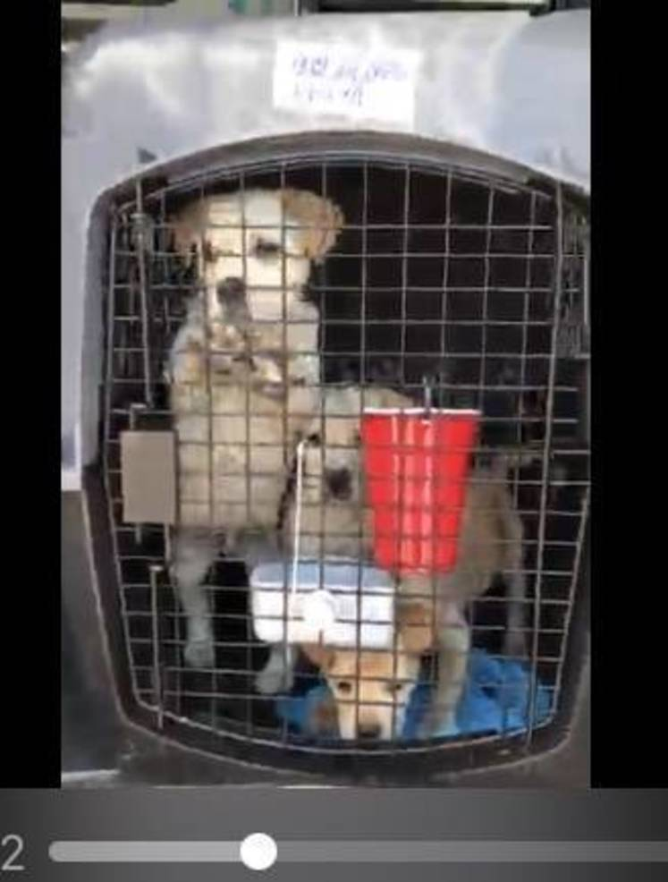 Transport of Dogs and Cats from Tornado-Ravaged Alabama Arrive at Morristown Airport