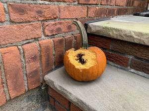 Guard Your Gourd Morristown: How To Keep Wildlife From Eating Your Pumpkins