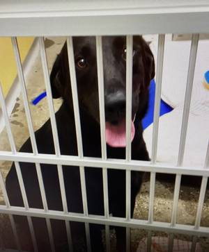 Emergency Flight of Animals from Hurricane-Ravaged Louisiana Lands at Morristown Airport