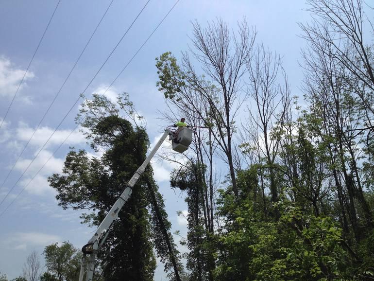 JCP&L vegetation management work underway.jpg