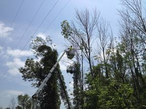 JCP&L 2021 Tree Trimming Program to Enhance Service Reliability Set to Take Place in Morristown