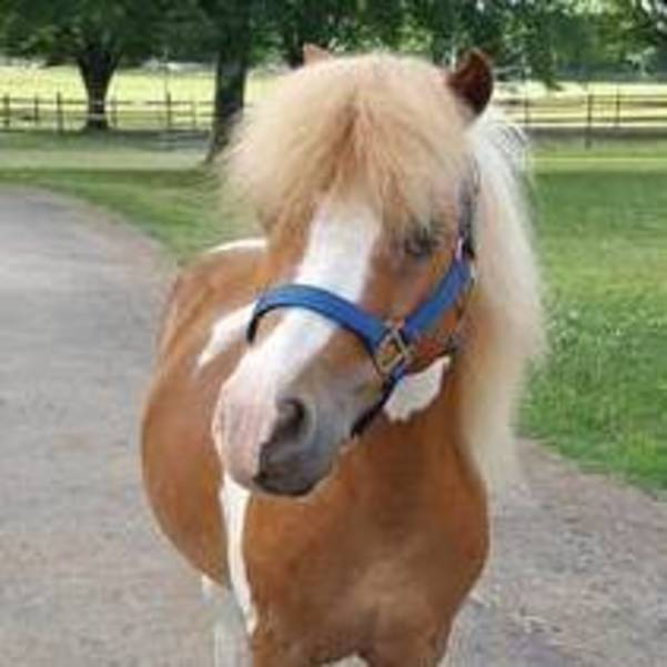 "Local Children Invited to Meet ""JJ,"" Newest Pony at Lord Stirling Stable, On Sunday"